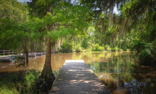 Fairview-Riverside State Park sits on 99 acres fronting the Tchefuncte River