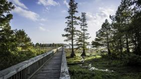 Boardwalk at Lake D'Arbonne State Park